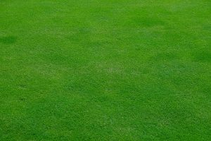 How To Make Your Grass Green Easily 2