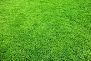 How To Make Your Grass Green Easily 3