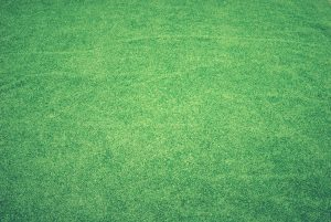 How To Make Your Grass Green Easily 1